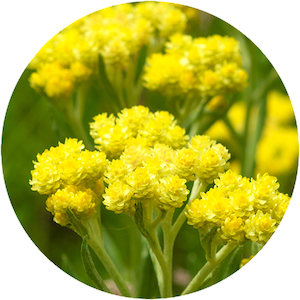 cupyslim-immortelle.png